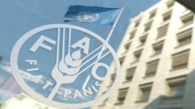 Internship Programme at Food and Agriculture Organisation of the UN
