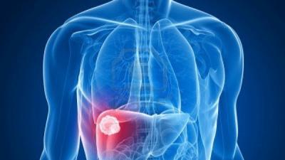 Тенката половина е битна за бубрезите и црниот дроб
