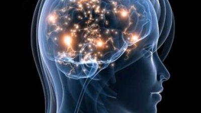 Мозокот на човекот и на кучето слично функционира