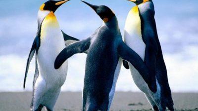 Пингвини доаѓаат во Зоо Скопје