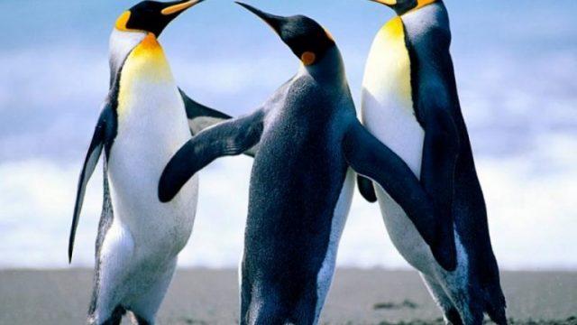 pingvini-768x576.jpg