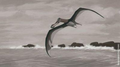 Трансилванија била дом на животно поопасно од диносаурусите!?
