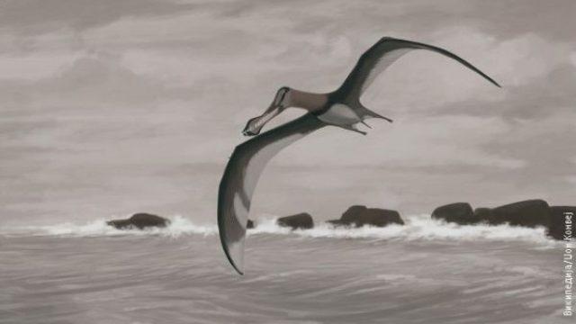 20170222-transilvanija-bila-dom-na-zhivotno-poopasno-od-dinosaurusite-m.jpg
