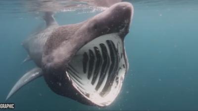 ВИДЕО: Десет чудовишта откриени во морето