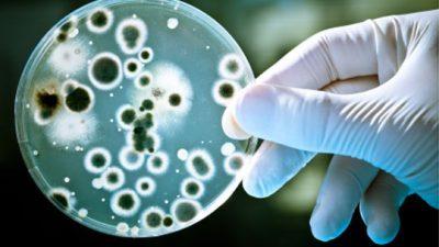Спејс-Икс пушта смртоносна бактерија во Вселената