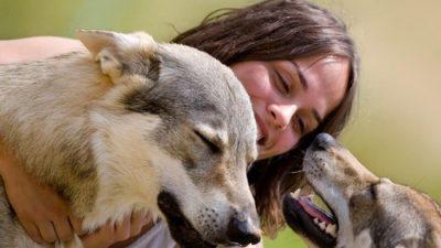 Семејство од Тетово кое живее со волци – Тие ни се како деца, луѓето се поопасни