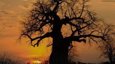 Поучна приказна: Судбината на едно дрво