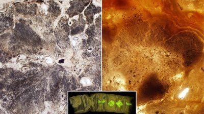 Откриени најстарите билки во светот: Фосили стари 1,6 милијарди години