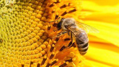 Мудра приказна: Светот го гледате како мува или како пчела?