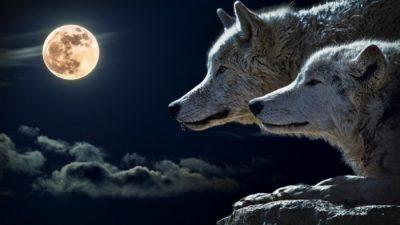 Приказна за двата волци: Се чита за 10 секунди, а поуката останува вечна!