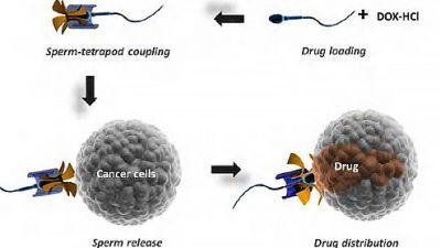 Сперма претворена во оружје против гинеколошки канцери