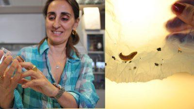Црви кои јадат пластика – можно решение за справување со пластичниот отпад