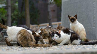 ЦИА користела мачки за шпионирање