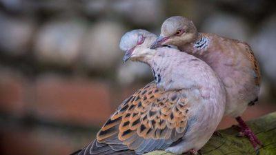 11 животни кои живеат во парови додека смртта не ги раздели