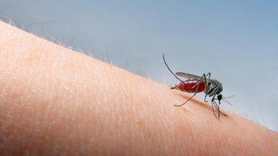 Овие четири типа на луѓе се најпривлечни за комарците