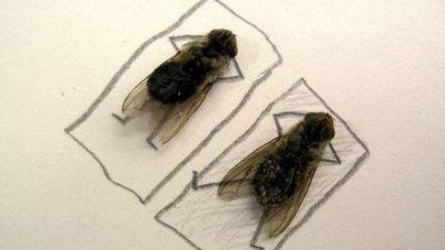 Одличен трик – Еве како да ги спречите мувите да влегуваат во вашиот дом