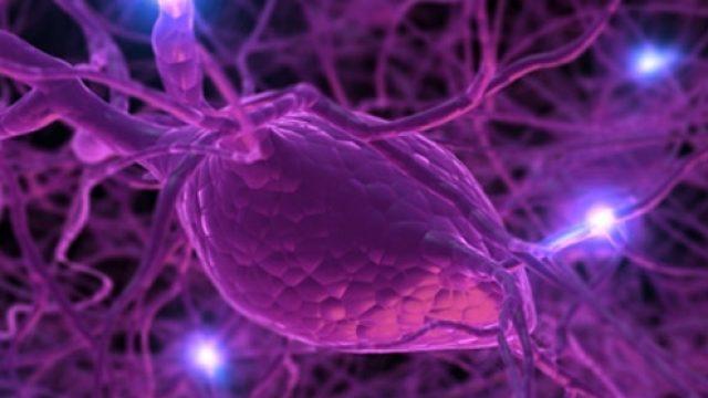 nevron.jpg