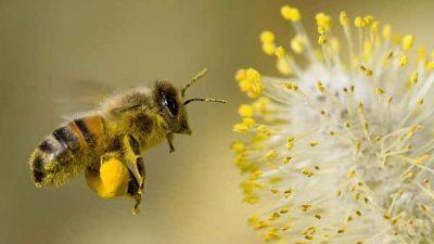 Франција е првата земја во светот која ќе ги забрани сите пет пестициди кои ги убиваат пчелите