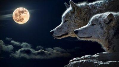 Приказната за двата волка: Се чита 20 секунди, а поуката останува вечно!