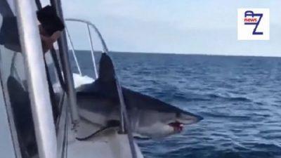 (ВИДЕО) Џиновска ајкула скокна од морето и се заглави на палуба на брод