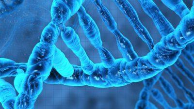 Само 25% од нашата ДНК е функционална