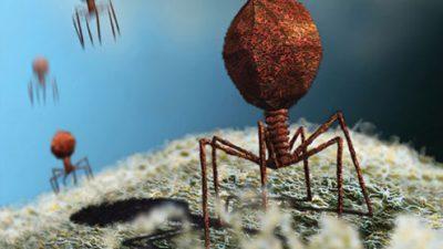 Се создаваат вируси за да убиваат бактерии