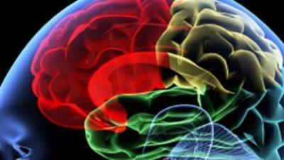 Човечкиот мозок постепено се намалува