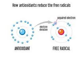 slobodni-radikali.jpg