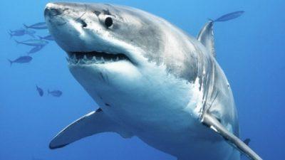 Факти за ајкулите кои досега не сте ги знаеле
