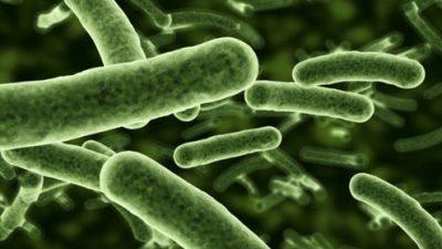 Како на филм: Бактерии менуваат форма во Вселената