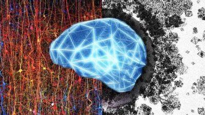 Научниците откритија: Човечкиот мозок може да создава структури во 11 димензии