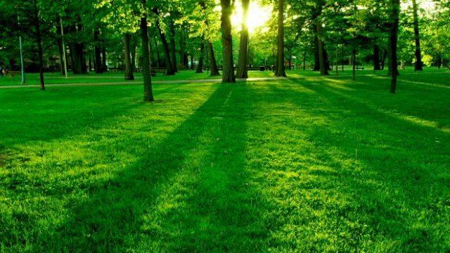 zelenilo.jpg
