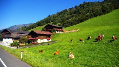 Работната сила се сели во Алпите каде ќе бидат потребни 30.000 работници