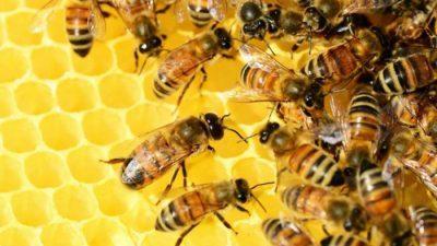 Научници откриле опасни супстанции во медот
