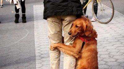 Моќта на прегратката: Видео од животни како гушкаат луѓе