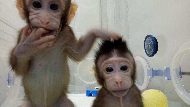 majmuni.jpg