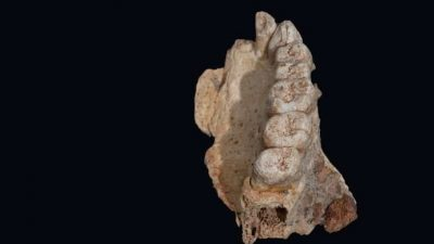 Ново откритие на археолозите менува се што знаеме за еволуцијата
