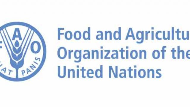 FAO-Hungarian-Government-Scholarship-2018-2019-Introduction-and-procedures.jpg