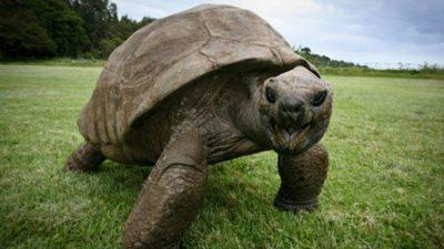 10-те најстари животни кои сѐ уште се живи