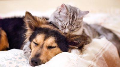 Какви луѓе сакаат мачки, а какви кучиња?