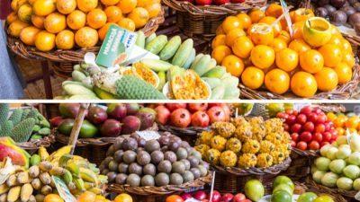 Дневница е 160 евра, оваа земја бара Балканци за да берат овошје