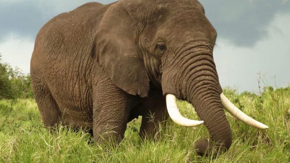 slonovi.jpg