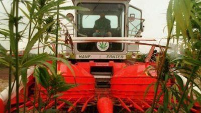 Македонци за 6.000 долари месечно на плантажи за канабис во Сан Франциско