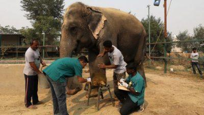 Во Индија отворена првата болница за слонови