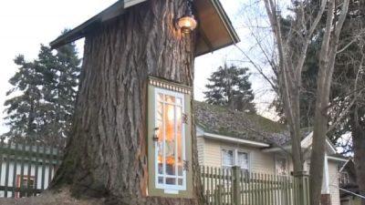 Од 110 години старо дрво настанала најавтентичната библиотека