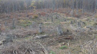 Шведски научници направиле гориво од остатоци од дрво