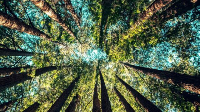 trees-e1551139063540.png
