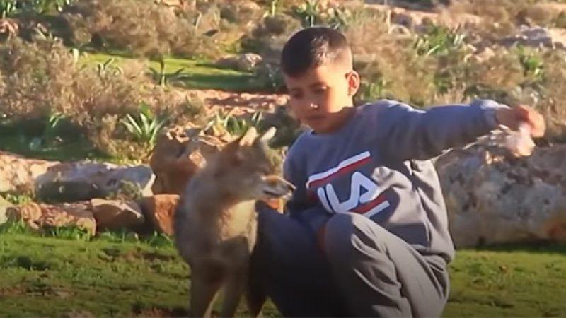 Момчето Хамза припитомило волк со кој сега чува овци …