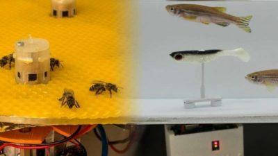Научници развија робот преведувач кој овозможува рибите и пчелите да разговараат меѓусебе