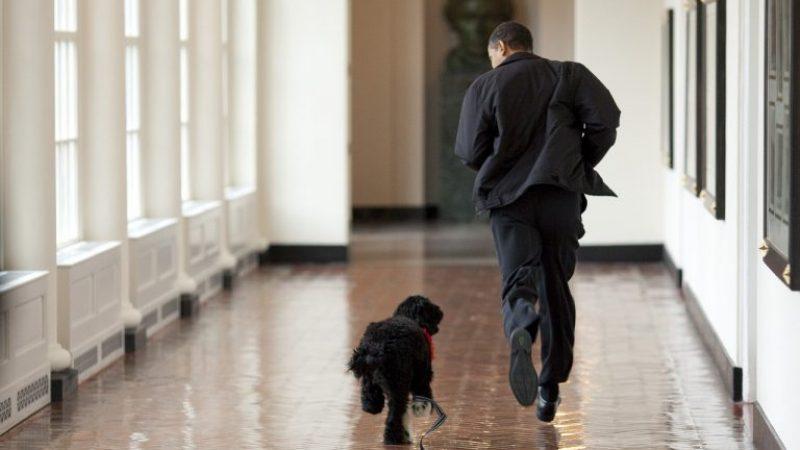 Студентите  испитниот стрес ќе го намалуваат со играње и шетање на куче